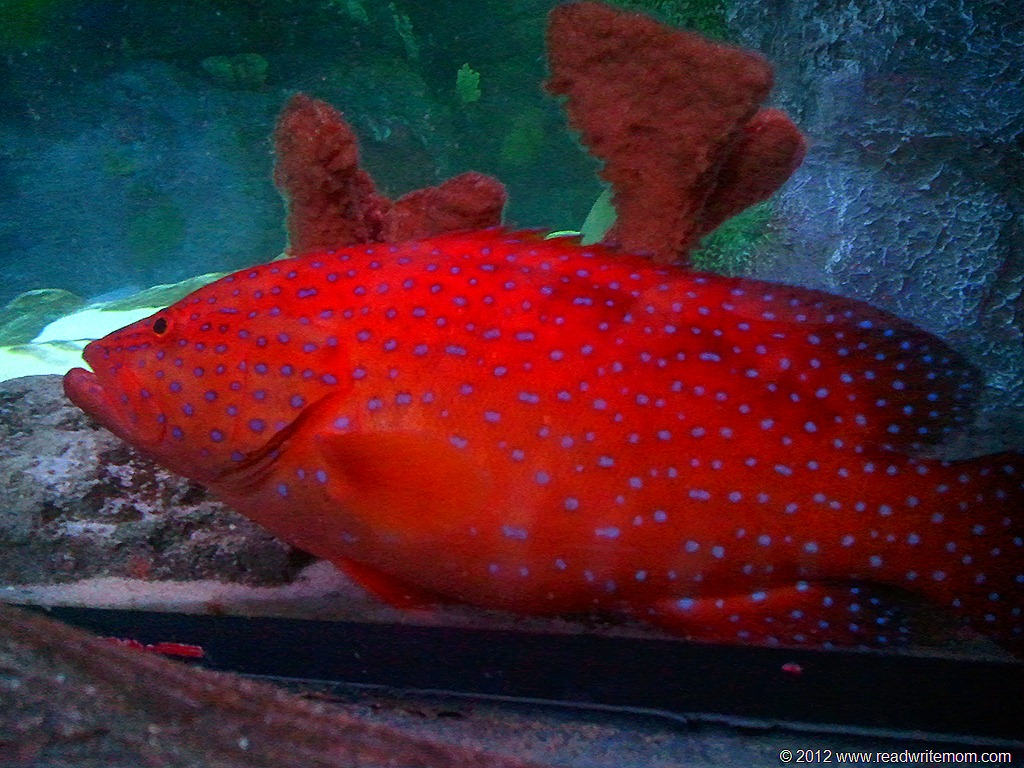 a review of sea life aquarium grapevine texas. Black Bedroom Furniture Sets. Home Design Ideas