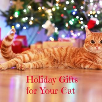 Fun Christmas Gifts for Cats- Don't Forget Your Feline Friend!