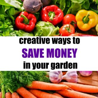 Creative Ways to Save Money in Your Garden