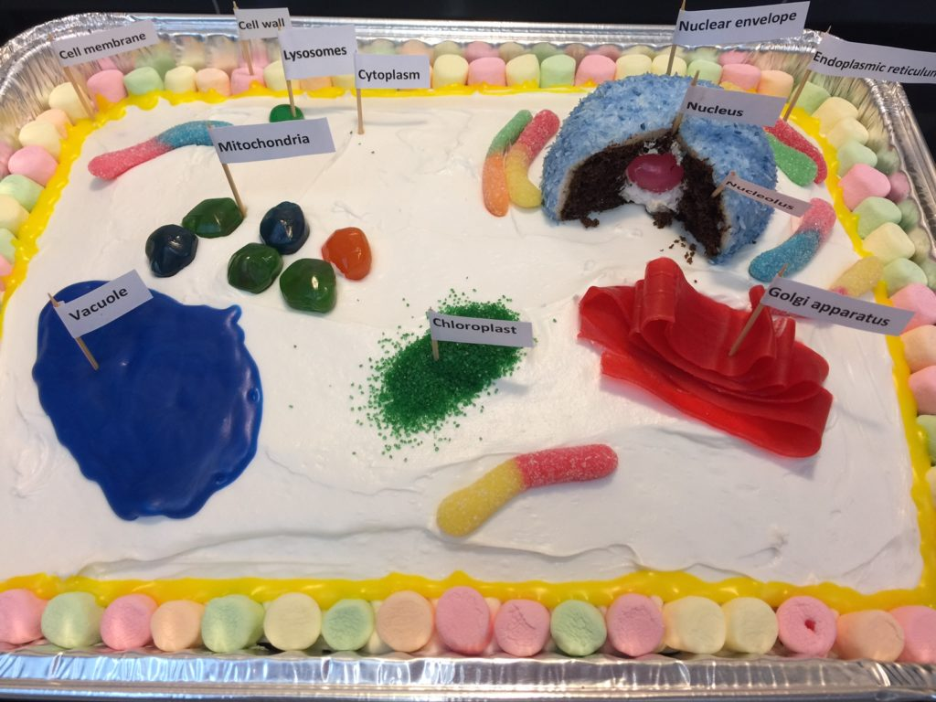 edible plant cell